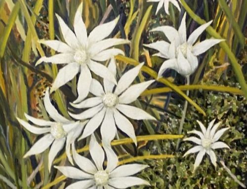 FLANNEL FLOWERS 76 X 51CM